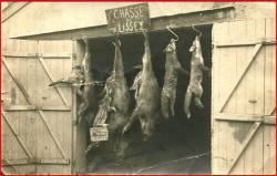 chasse-lissey-1.jpg
