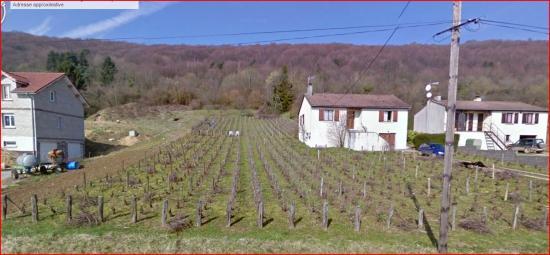 vigne-a-lissey.jpg